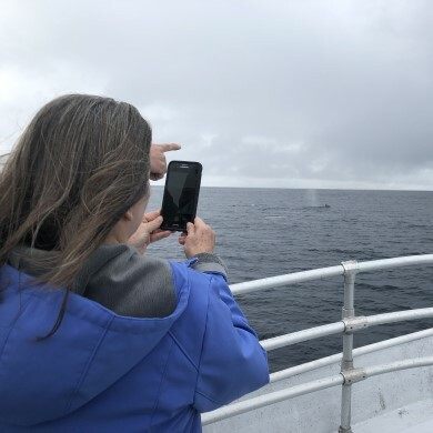 Year Round Whale Watching Aboard the Legacy
